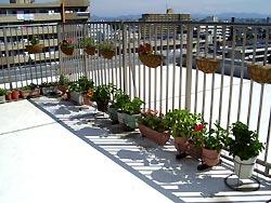 「ルーフバルコニー 植物」の画像検索結果